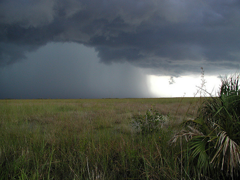 Everglades summer thunderstorm
